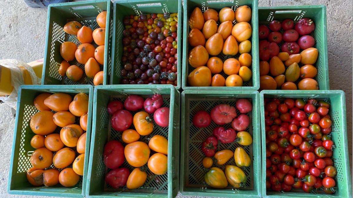 Tomaten_Kiste_klein